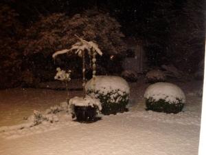 Snow, Snow, Snow....